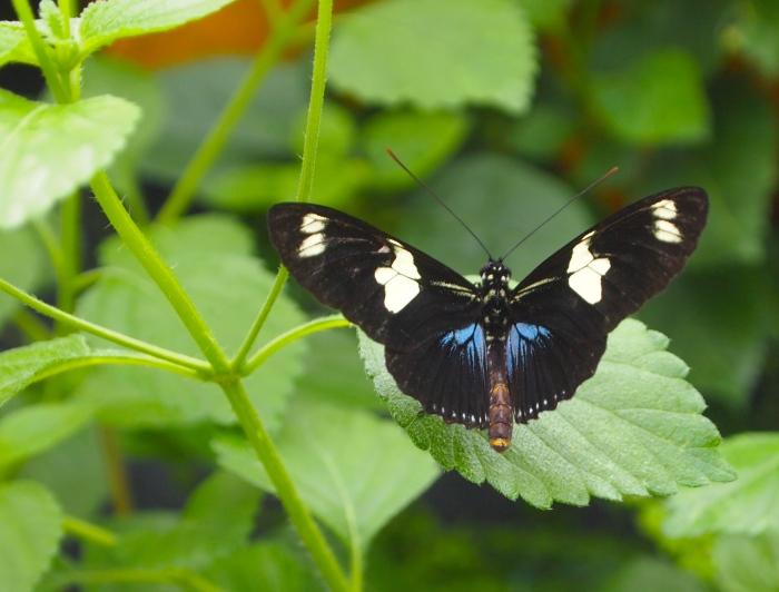Butterflies LIVE!