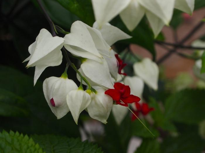 pretty flowers inside Butterflies LIVE!