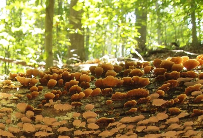 Fungi on trees at Scott's Run