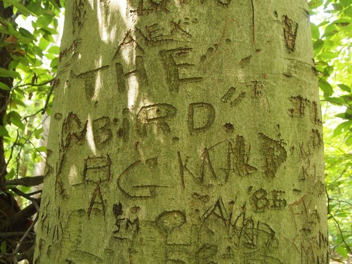 initials carved into trees