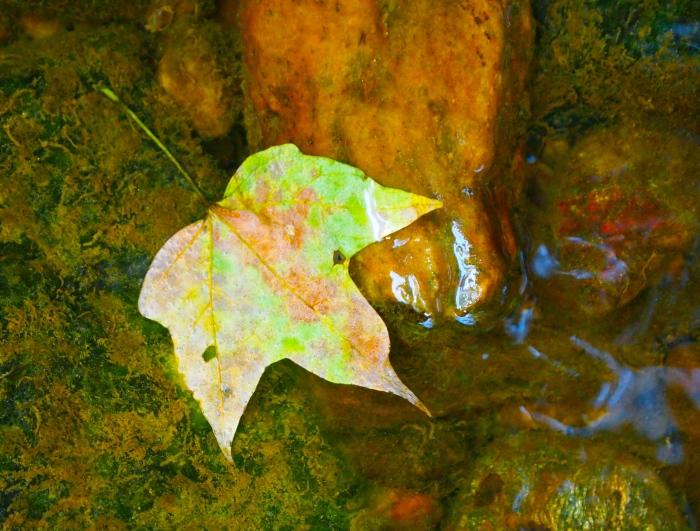 a lone leaf
