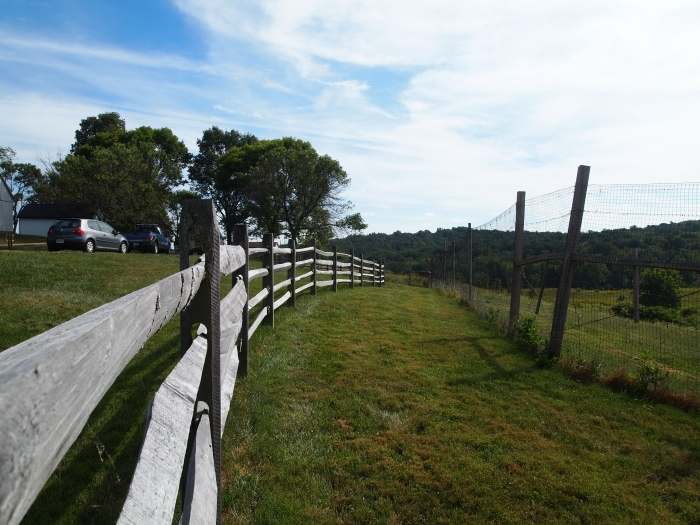 fences at Sky Meadows