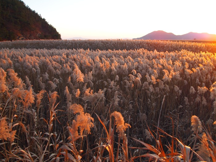 Suncheon Ecological Bay in South Korea