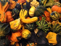 gourds of all colors and shapes