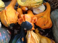 Gourds at the Hands & Harvest Fall Foliage Festival