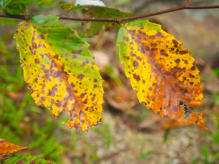 tinges of autumn
