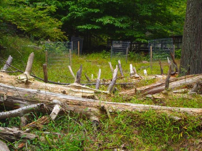 spiky fallen trees