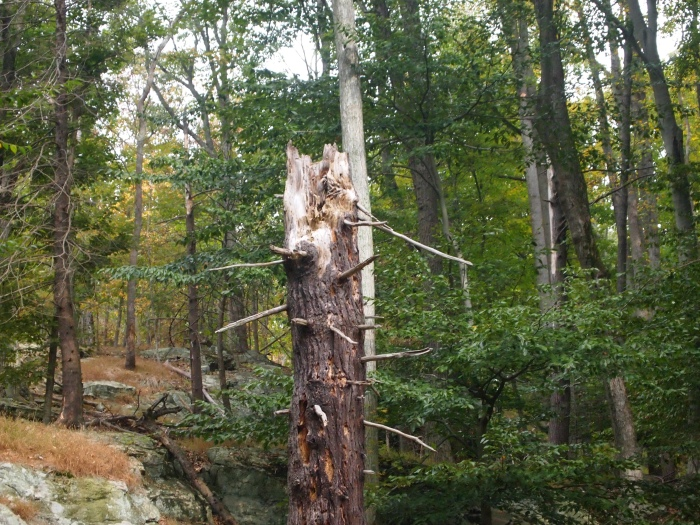 spiky standing tree