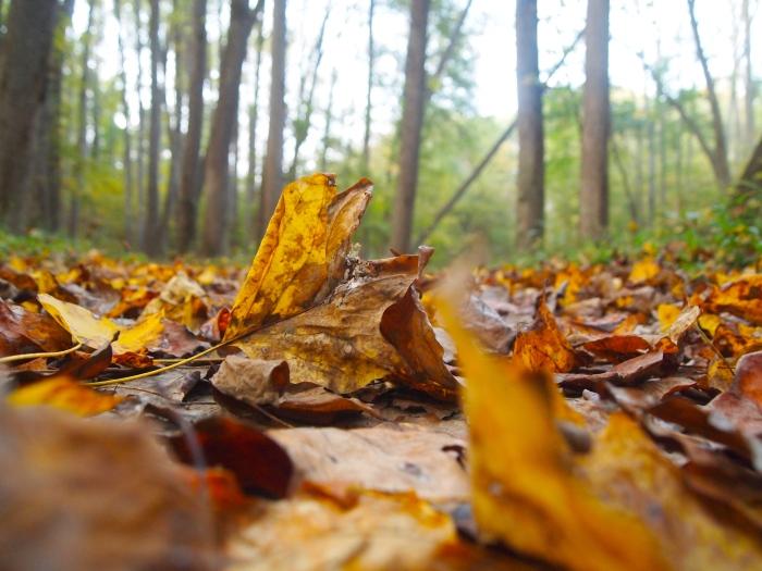 Infinite leaves