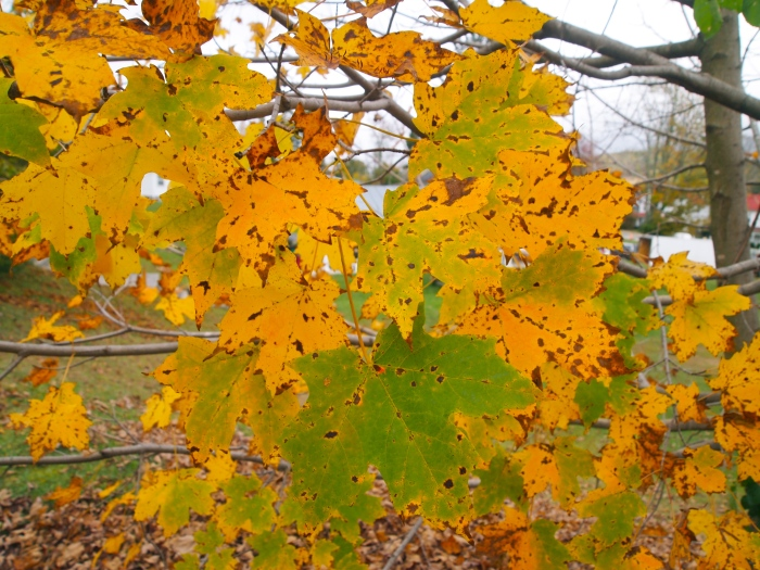 Fall foliage in Monterey, Virginia