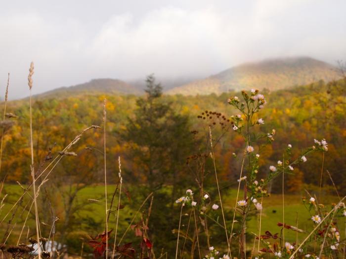 rainbow Monterey
