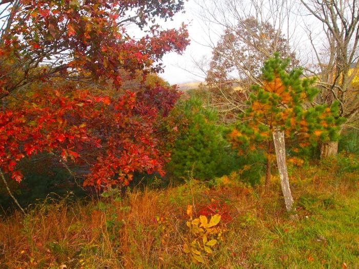 bright fall foliage