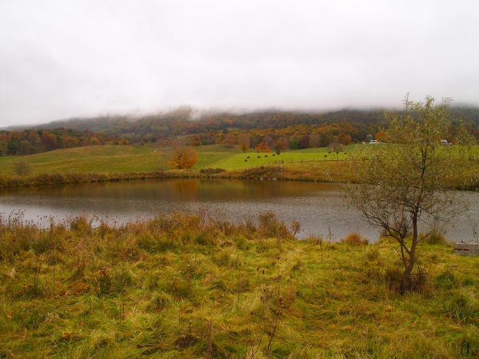 ponds and pastures