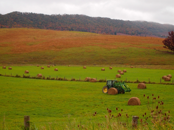 bales of hay in green pastures