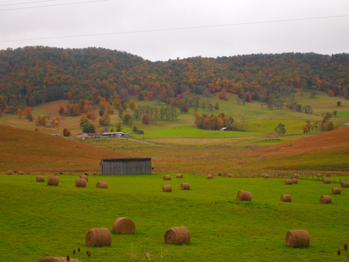 bales of hay in green