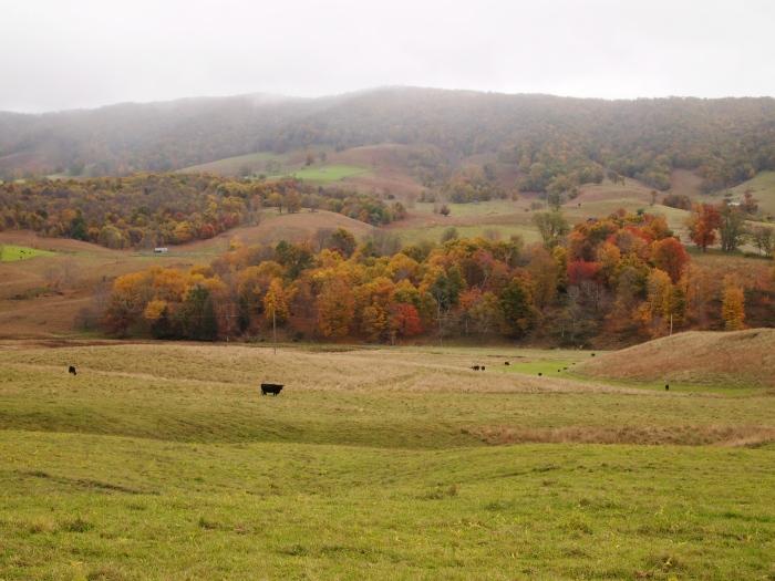 farmland and fall foliage