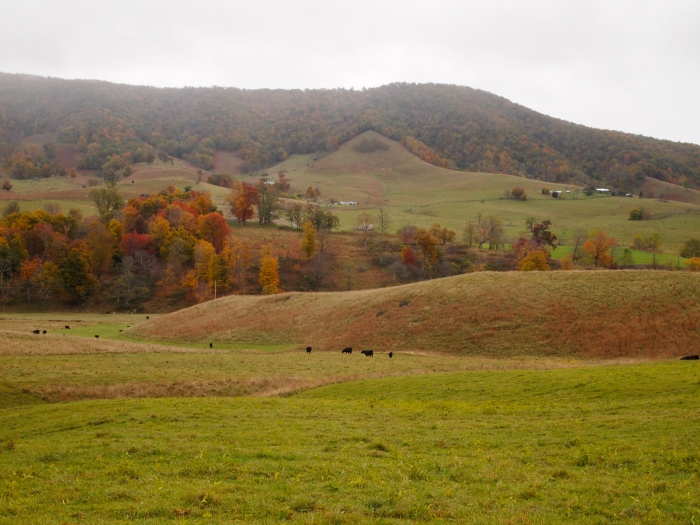 rolling hills and colorful trees
