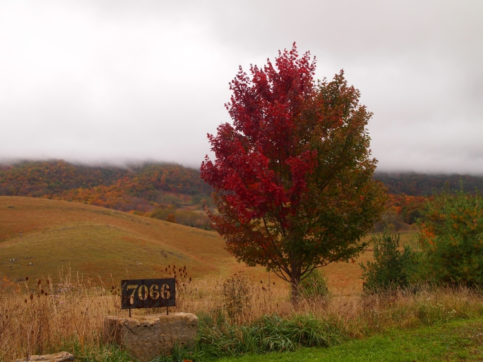 fall foliage along Bluegrass Mountain Road