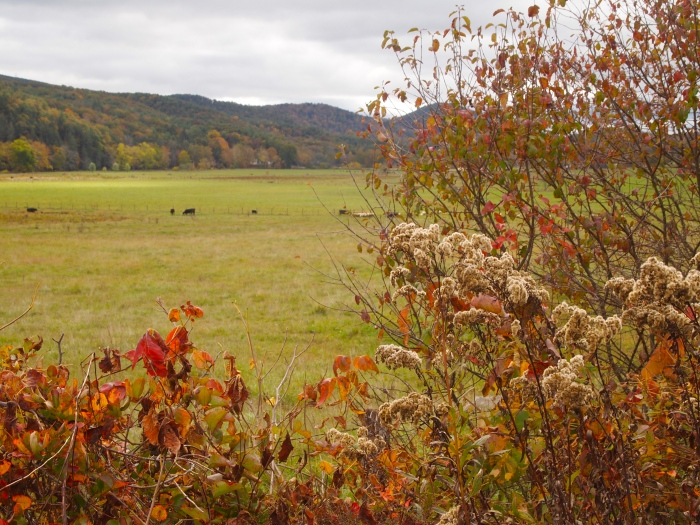 fall foliage and farmland