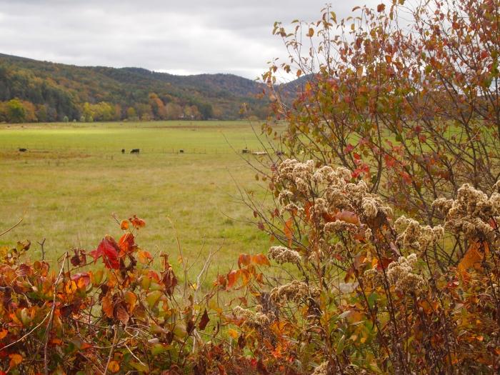 fall foliage and farmland