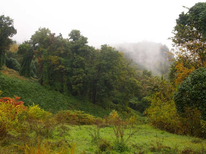 foggy Shenandoah