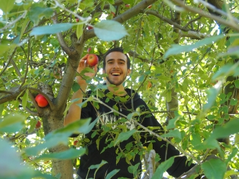 Alex picks apples