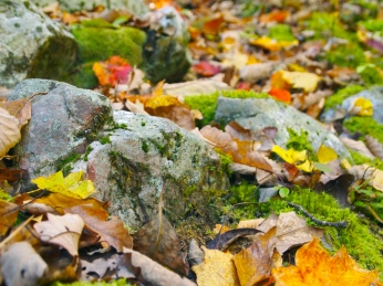 leaves, moss and rocks