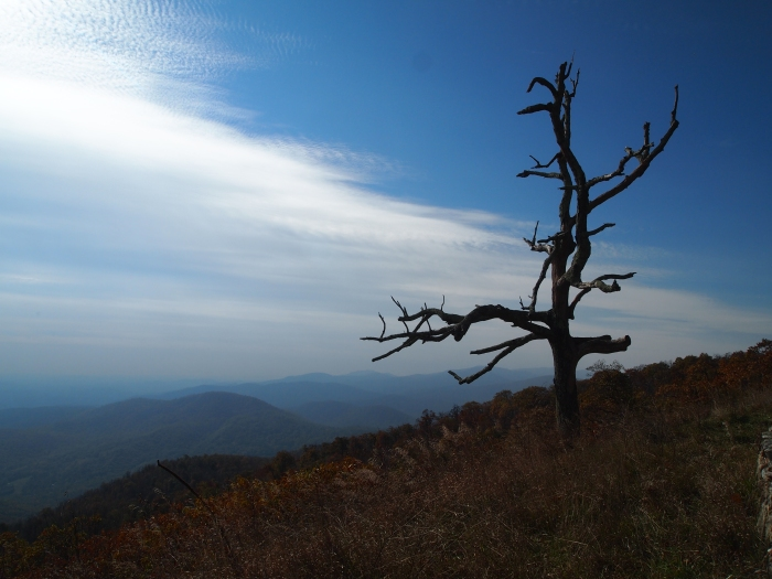 Along Skyline Drive in Shenandoah National Park
