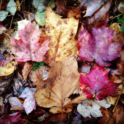 layers of colorful but dying leaves