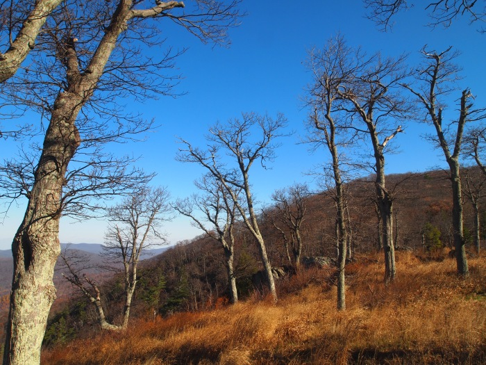 naked trees at Jewell Hollow Overlook