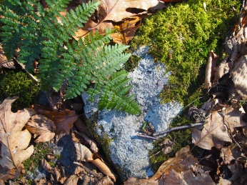 ferns, moss, rocks & leaves