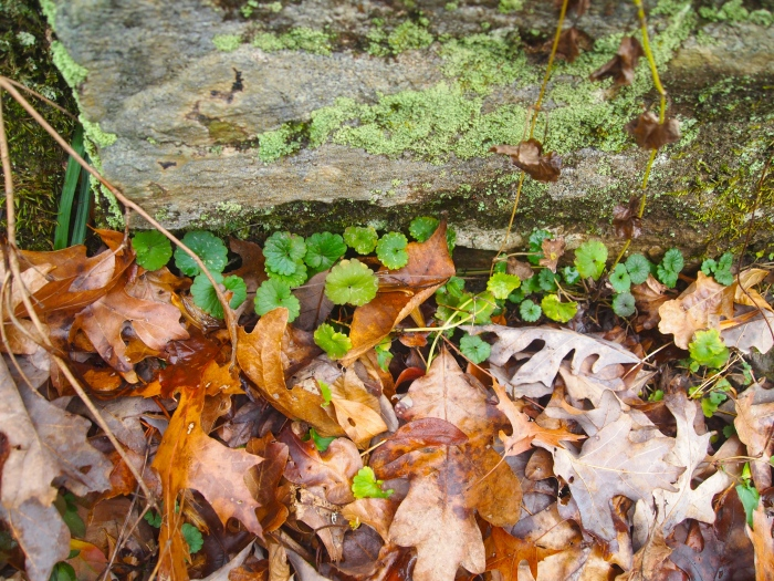 layers of moss-covered logs, plants and leaves