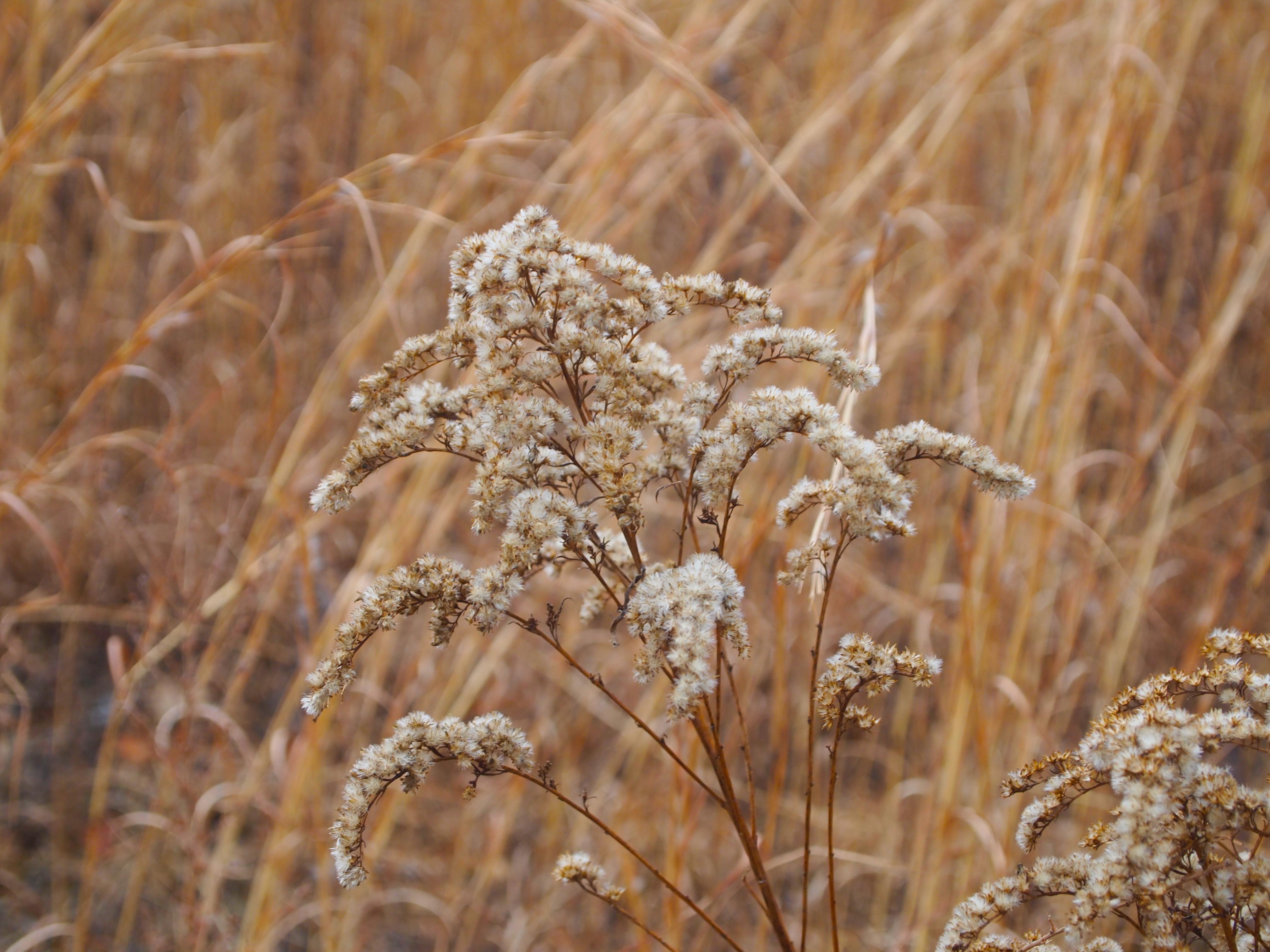 a winter walk at meadowlark gardens u2013 nomad interrupted