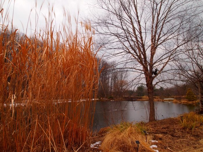 ponds and grasses