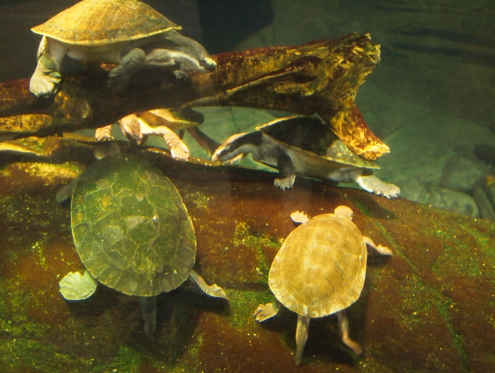 Turtles in Animal Planet Australia