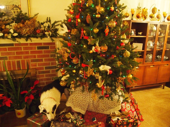 Bailey searches under the Christmas tree for goodies