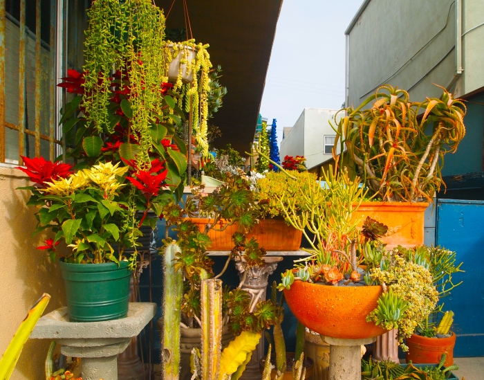 patio garden on Venice Beach