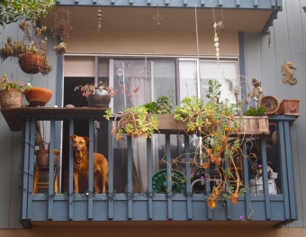 a dog in the balcony garden