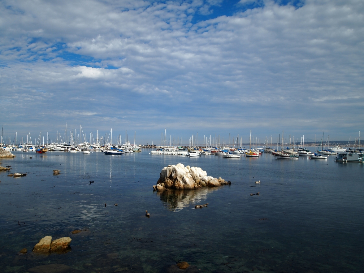 sea otters and fishing boats on Monterey Bay