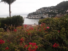 view of the little harbor from Sausalito