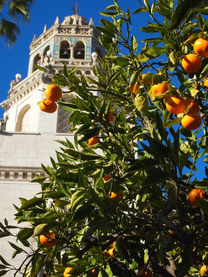 Oranges at Casa Grande