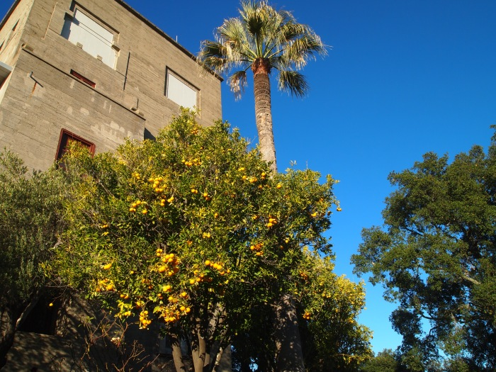 Palm trees and native flora