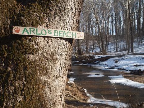 Arlo's Beach