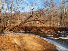 half-fallen trees over Difficult Run