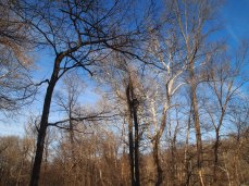 Spindly trees