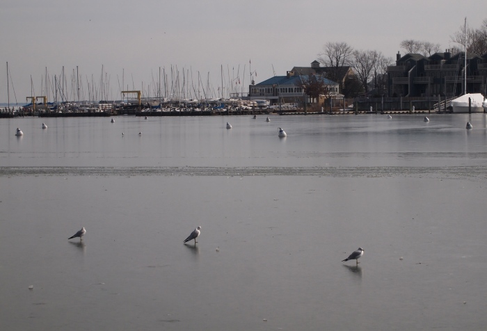 seagulls walking on water