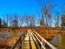 boardwalk through wetlands