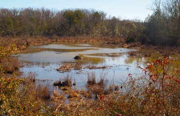 pond with beaver lodge