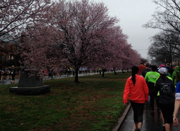 Some signs of spring - cherry blossoms?