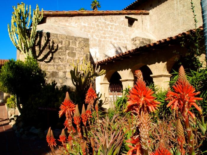 Succulents at Santa Barbara